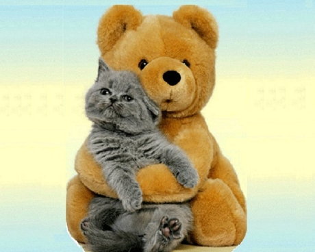 cat1Bear-and-Cat-Wallpaper-cats-28362989-1280-1024