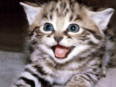 cat4khout-kitten-458882