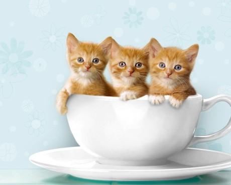 cat6-_-cats-cats-22066039-1280-1024