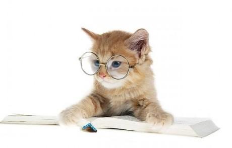 cat7Cute Cat With Glasses