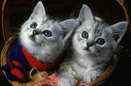 cat8CATS2