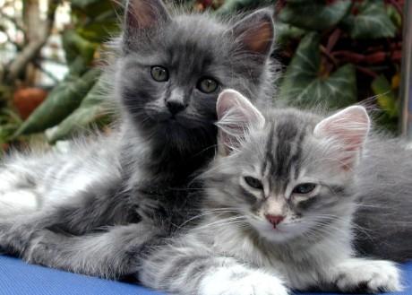 cat9cats